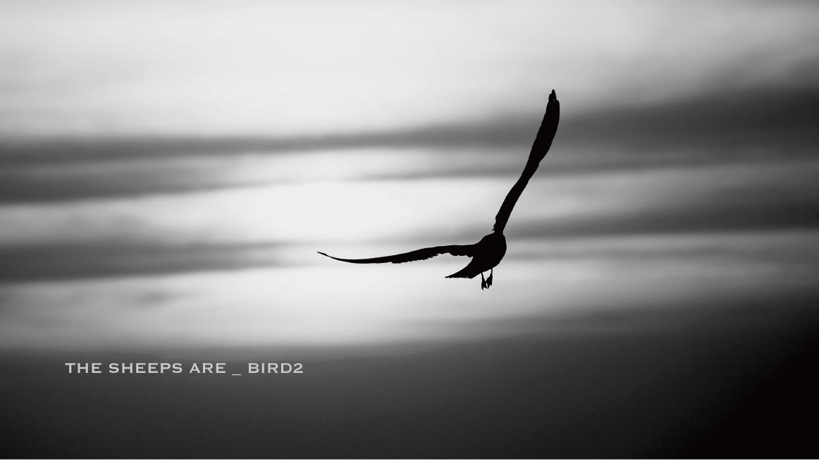BIRD2mix